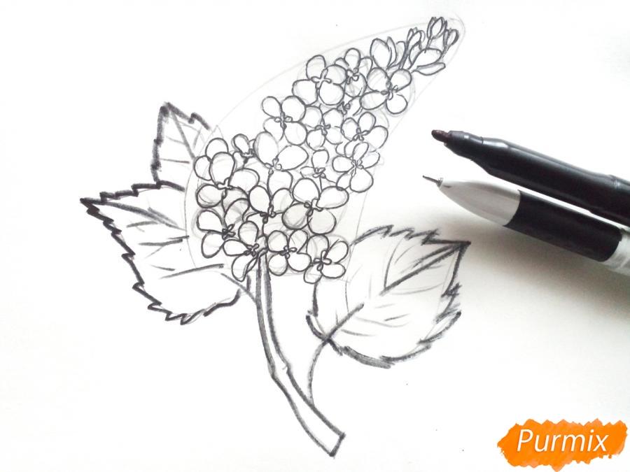 Рисуем сирень карандашами - шаг 5