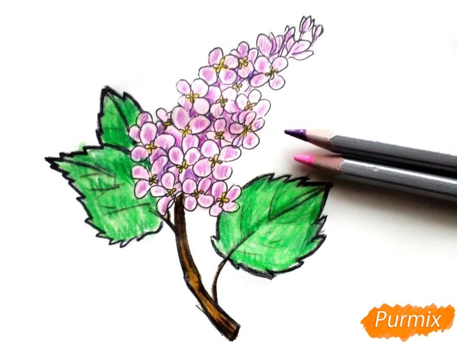 Рисуем сирень карандашами - шаг 7