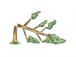 Фото сломанное дерево
