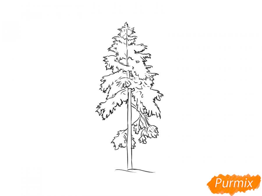 Рисуем сосну зимой - шаг 6