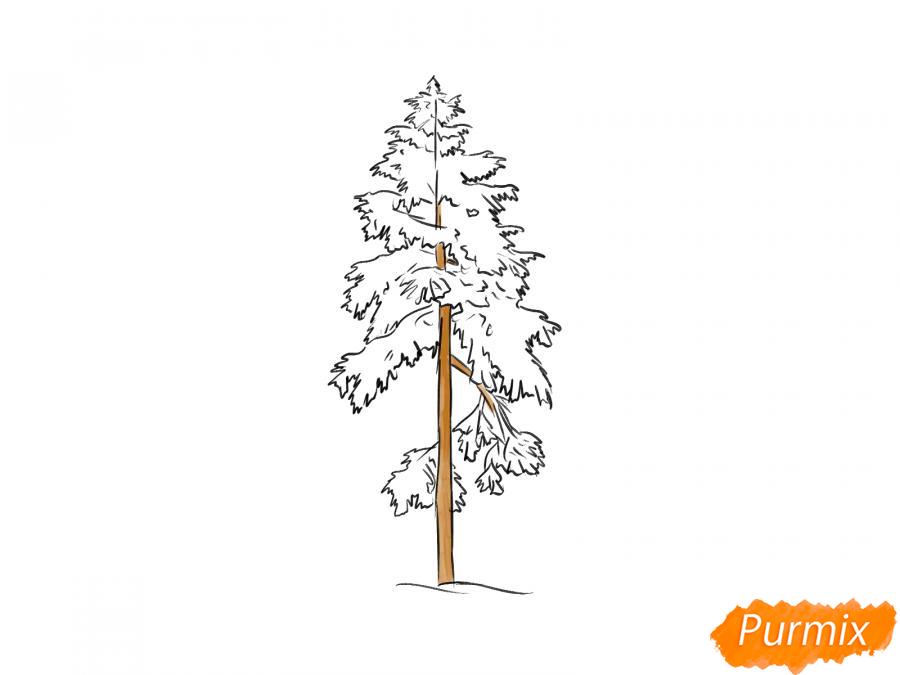 Рисуем сосну зимой - шаг 7