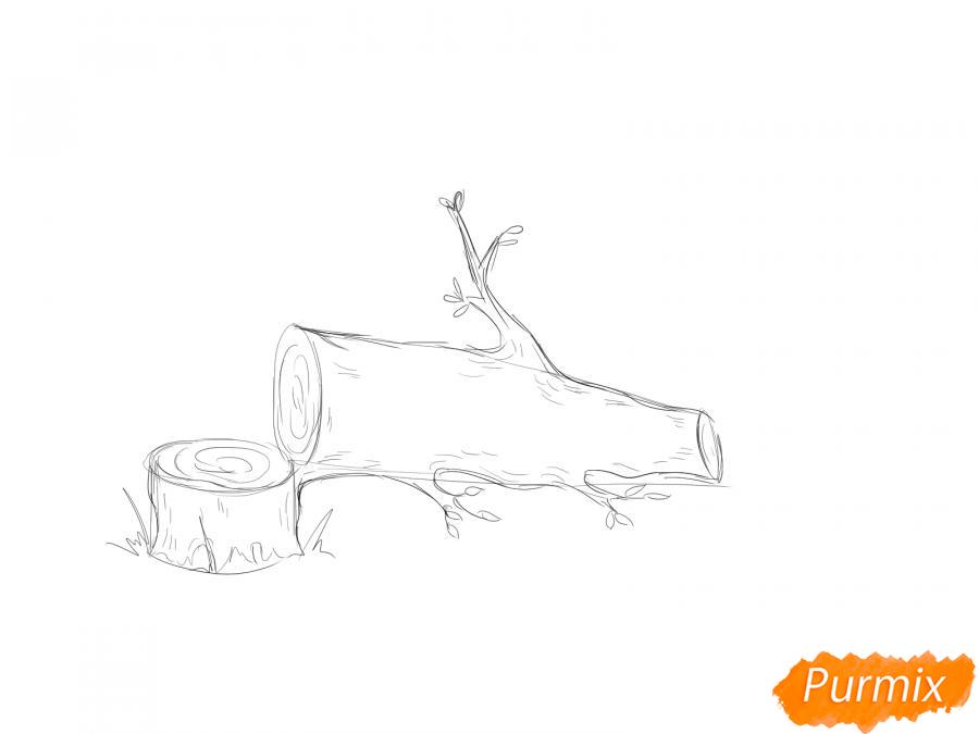 Рисуем спиленное дерево - шаг 4