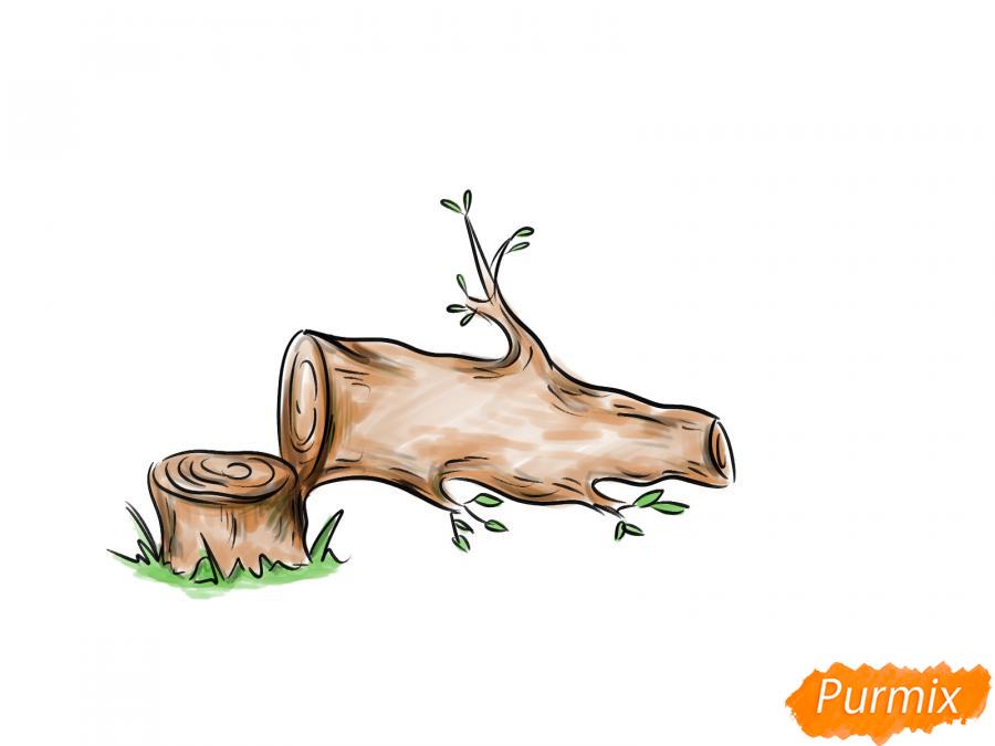 Рисуем спиленное дерево - шаг 8