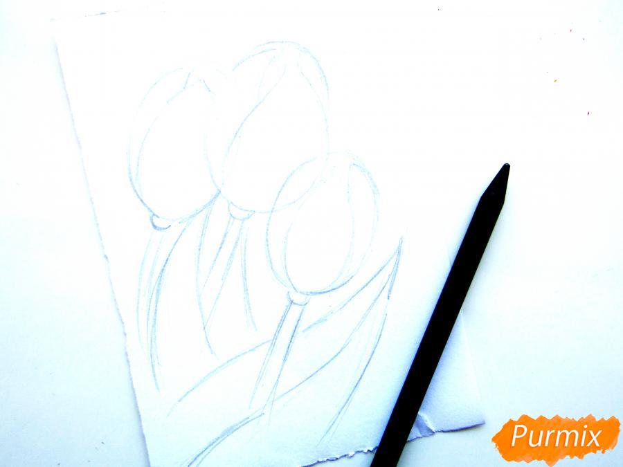 Рисуем три тюльпана цветными карандашами - шаг 3