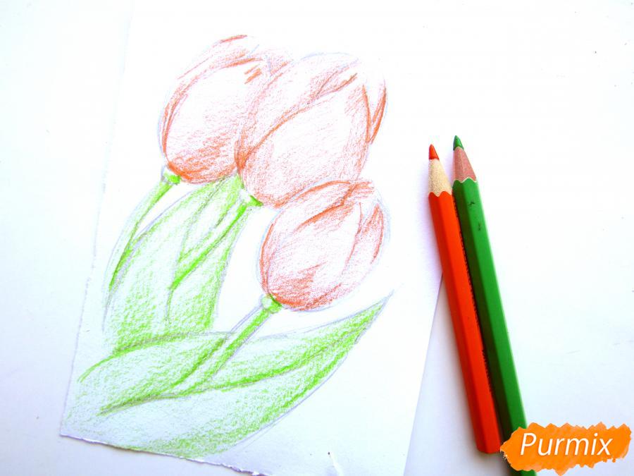 Рисуем три тюльпана цветными карандашами - шаг 4