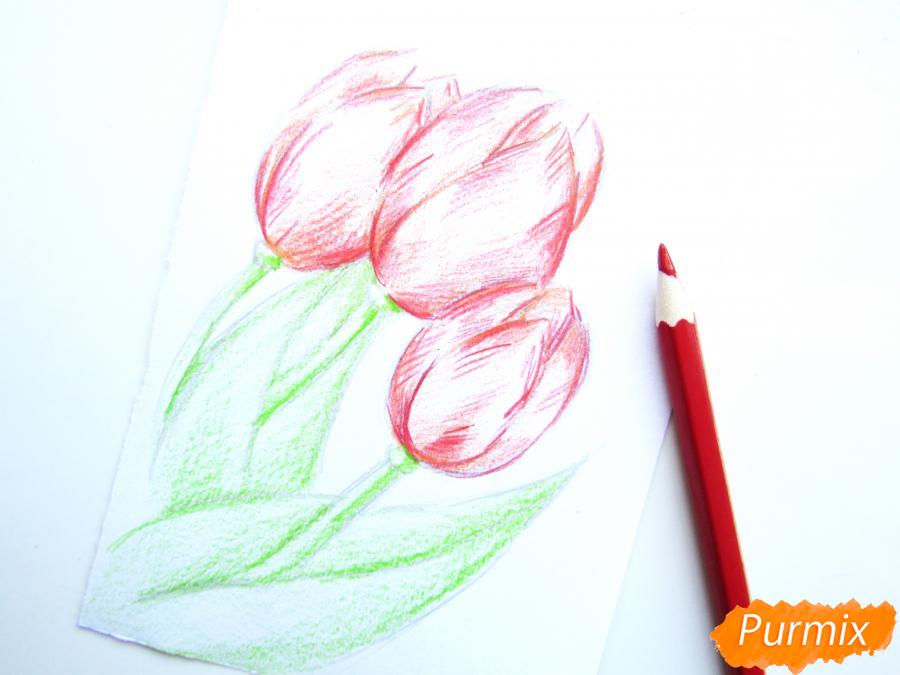 Рисуем три тюльпана цветными карандашами - шаг 5