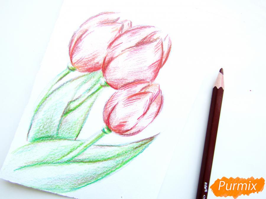 Рисуем три тюльпана цветными карандашами - шаг 6