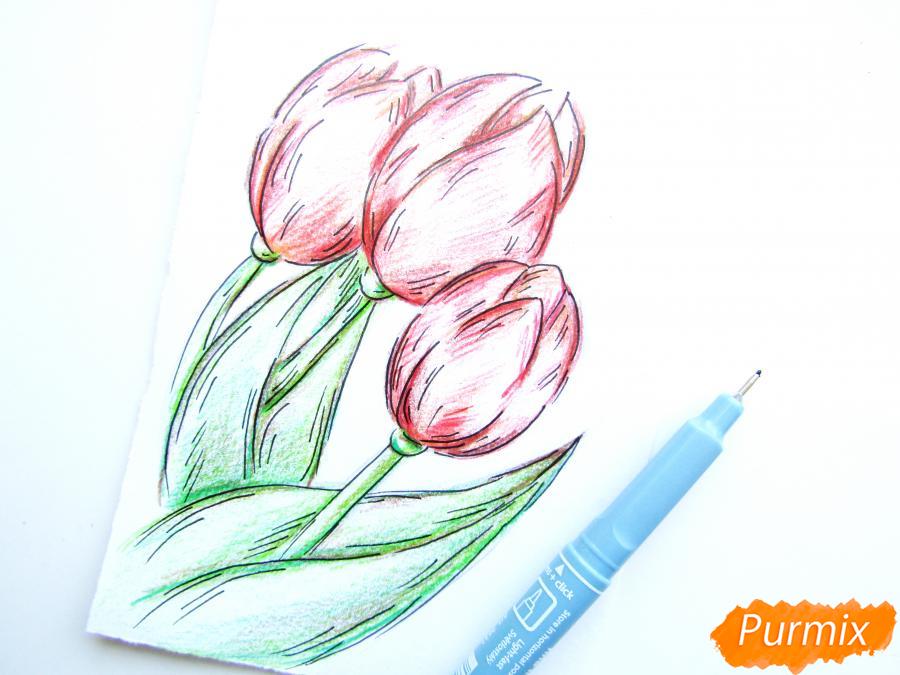 Рисуем три тюльпана цветными карандашами - шаг 7