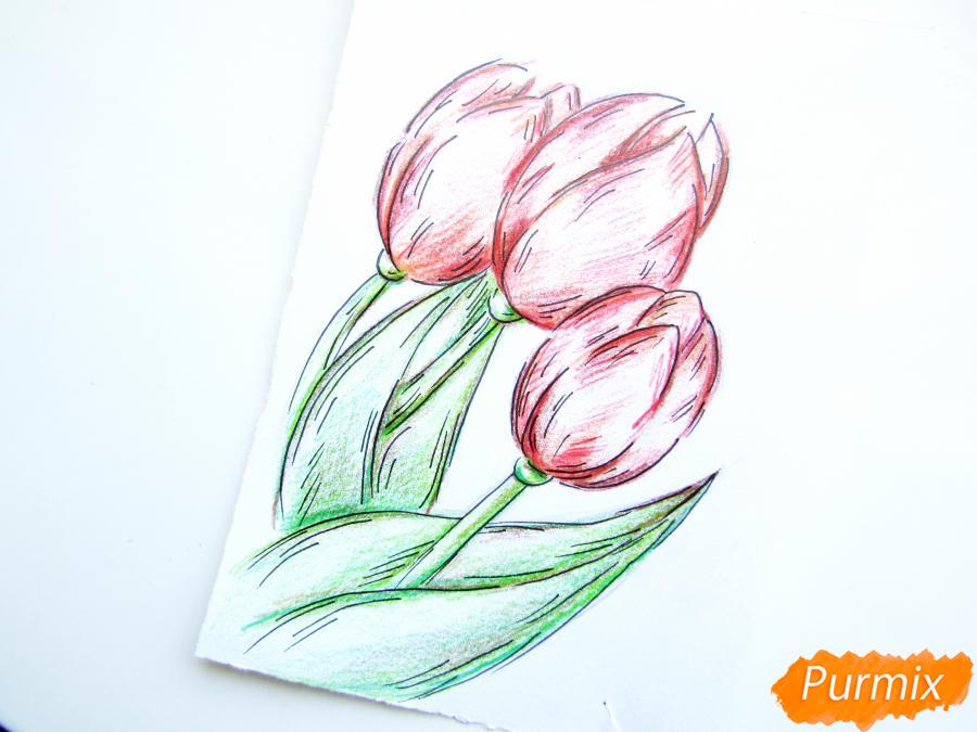 Рисуем три тюльпана цветными карандашами - шаг 8
