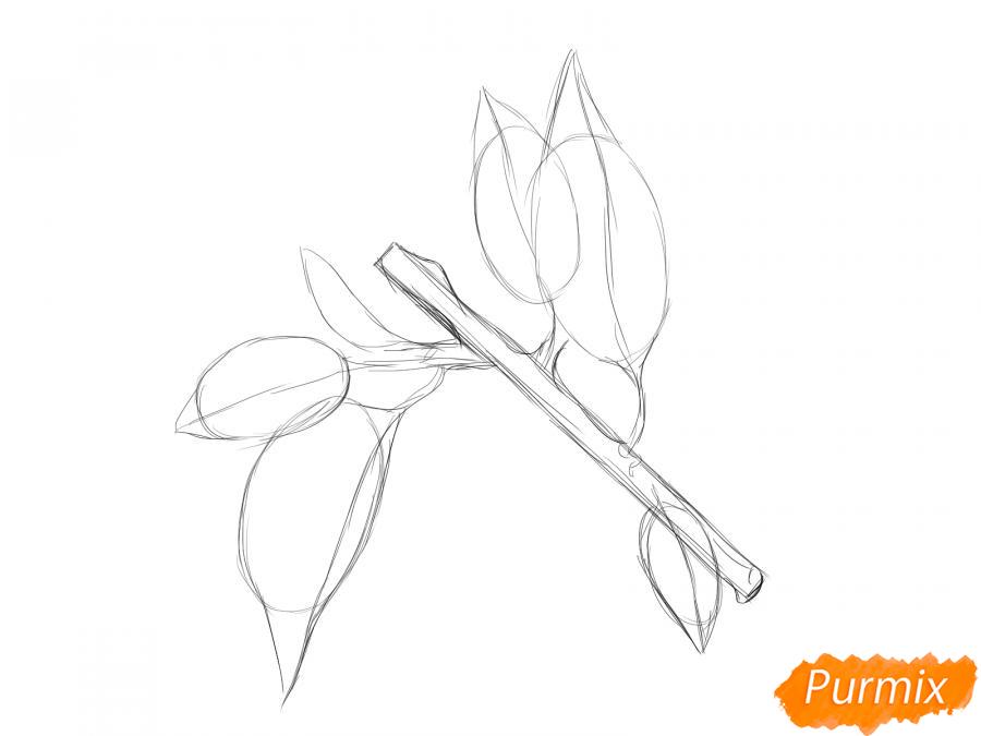 Рисуем ветку абрикоса - шаг 4