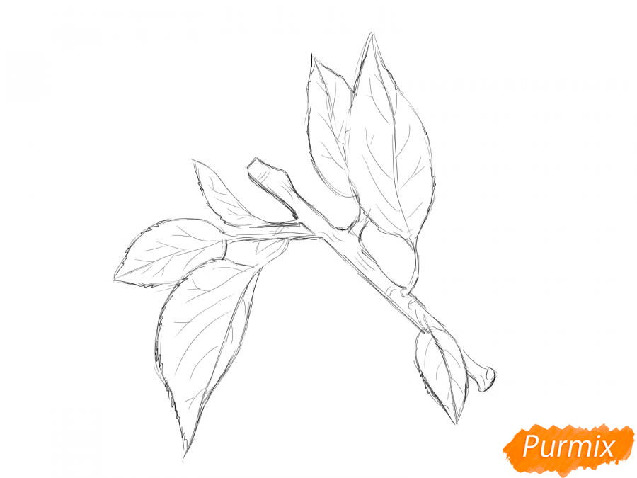 Рисуем ветку абрикоса - шаг 5
