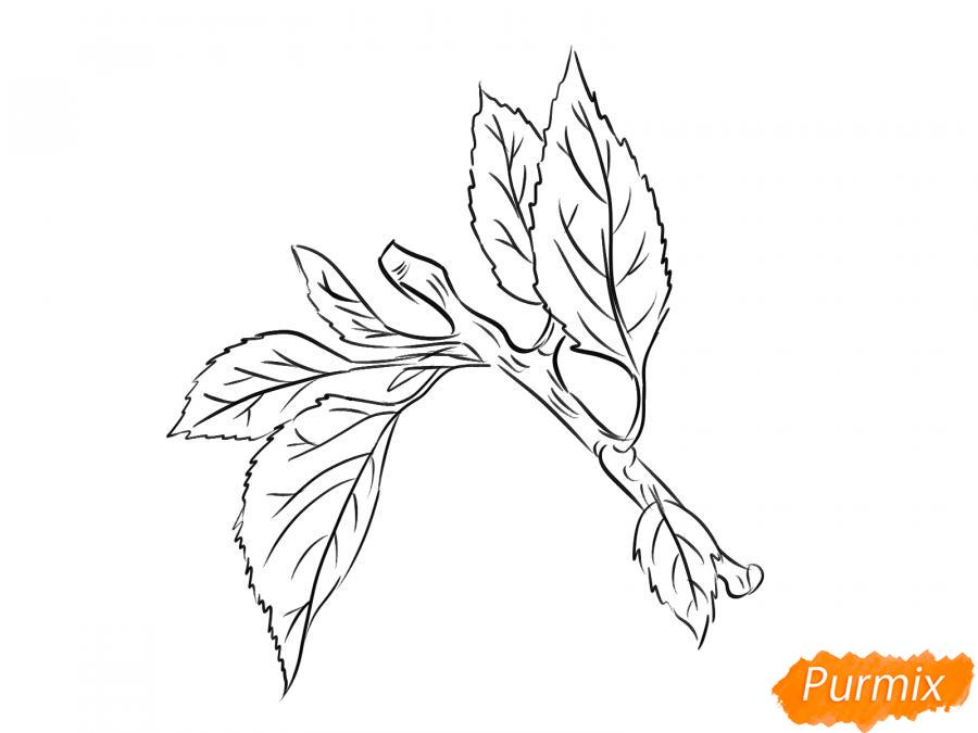 Рисуем ветку абрикоса - шаг 6