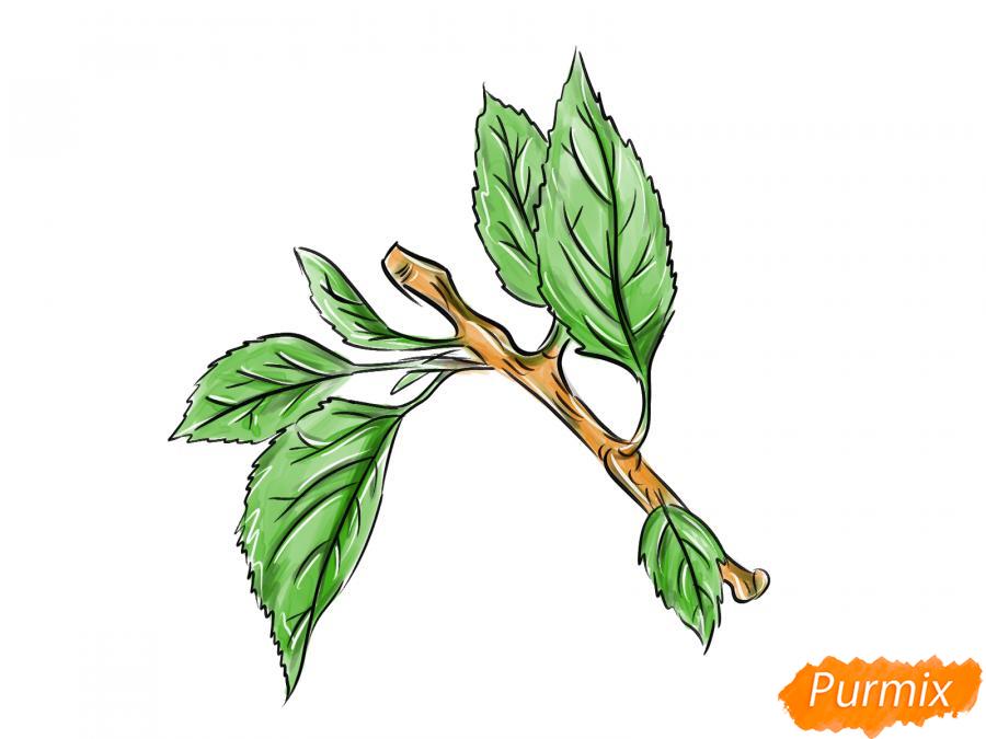 Рисуем ветку абрикоса - шаг 9