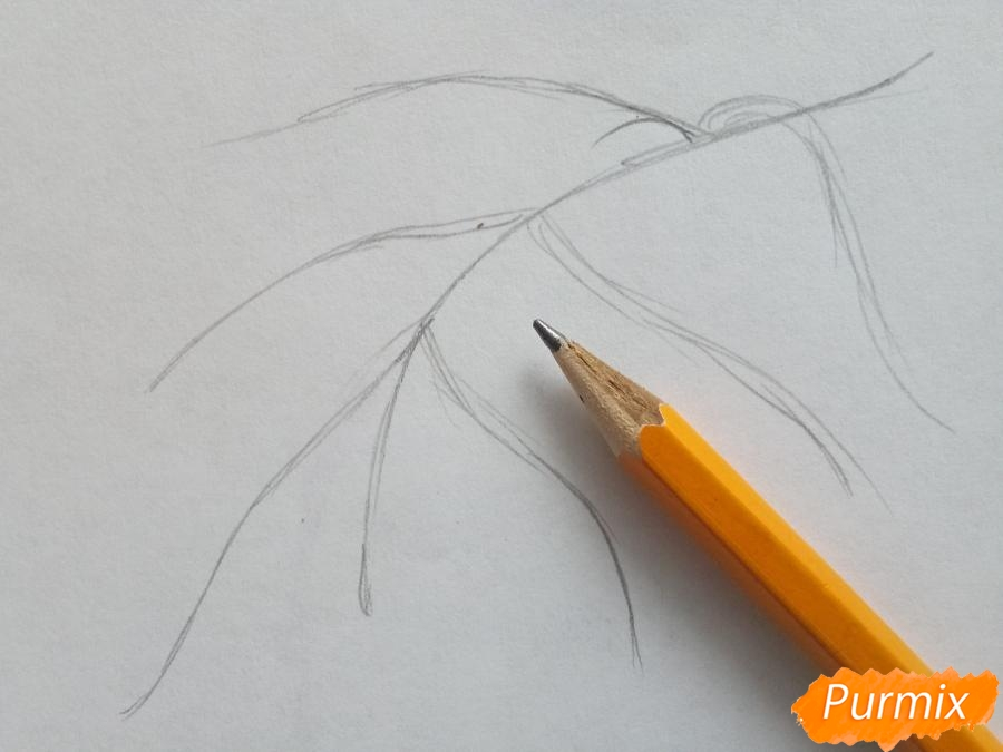 Рисуем ветку березы с листьями - шаг 1