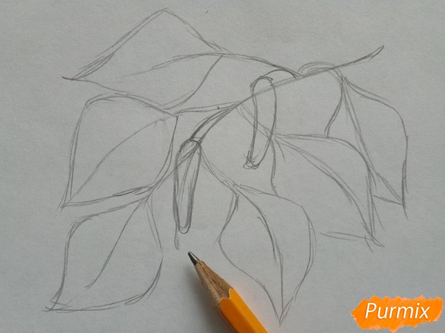 Рисуем ветку березы с листьями - шаг 2