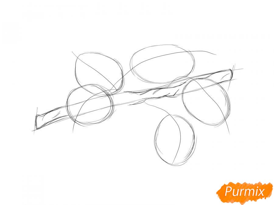 Рисуем ветку с листьями груши - шаг 4