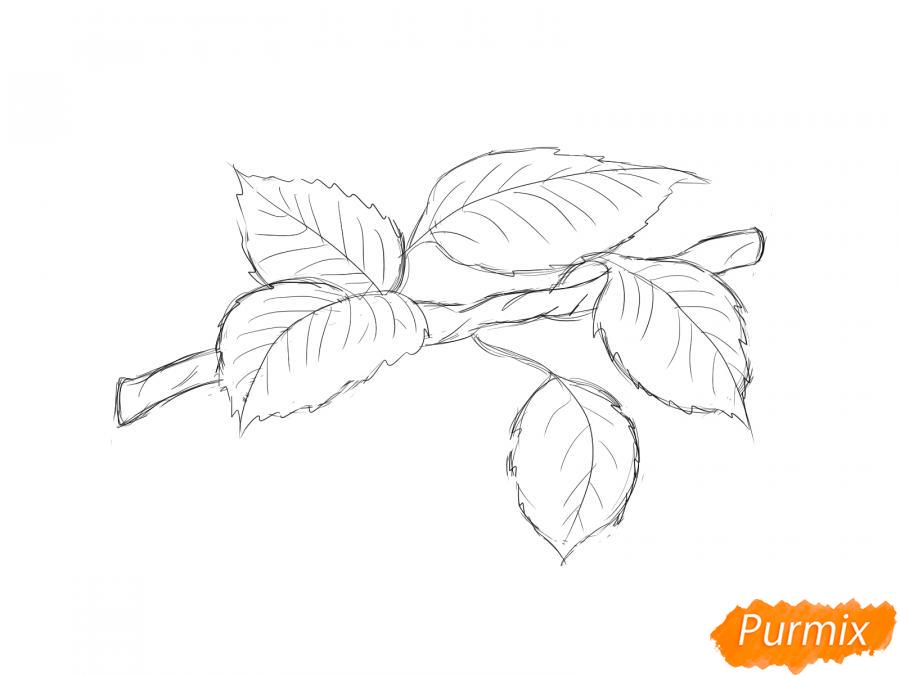 Рисуем ветку с листьями груши - шаг 5