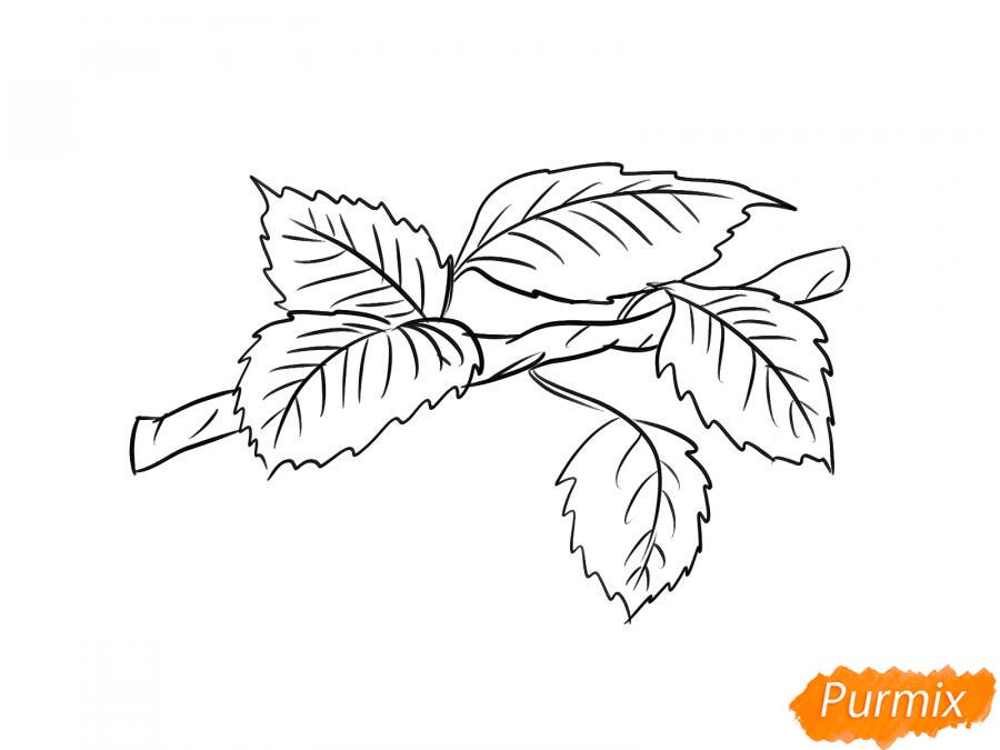 Рисуем ветку с листьями груши - шаг 6