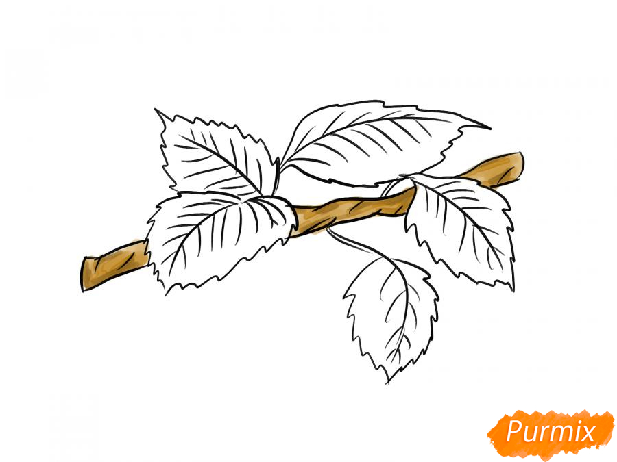 Рисуем ветку с листьями груши - шаг 7