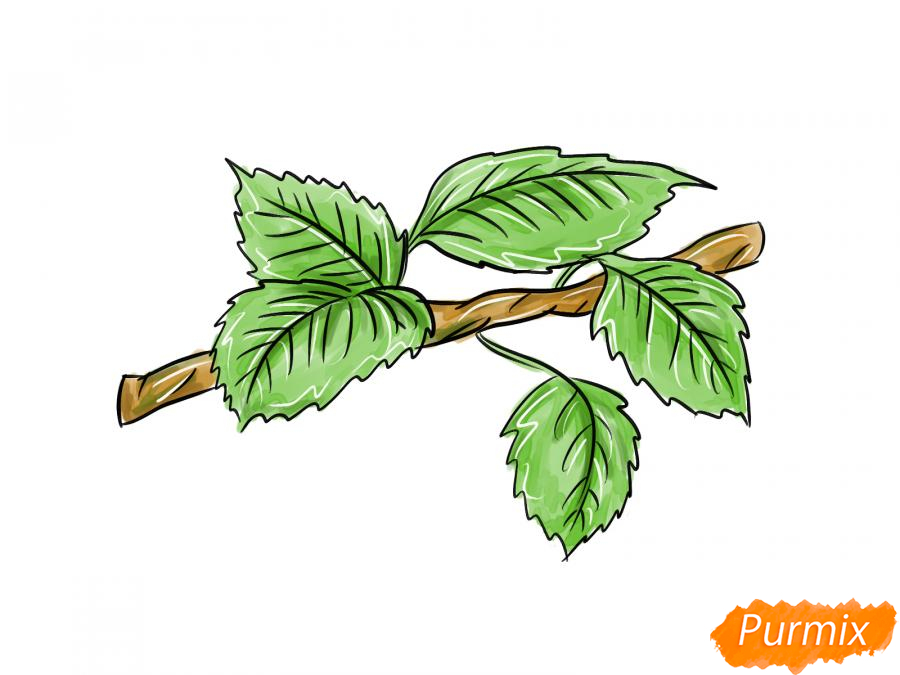 Рисуем ветку с листьями груши - шаг 9