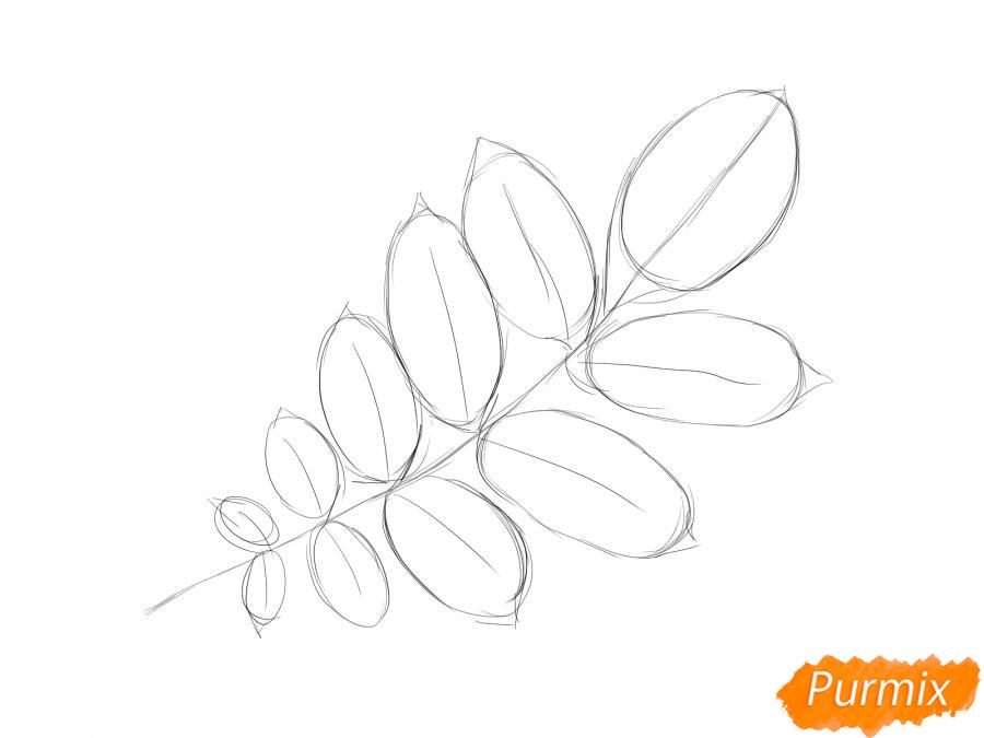 Рисуем ветку с листьями ореха - шаг 3