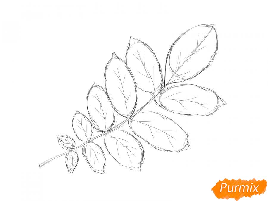 Рисуем ветку с листьями ореха - шаг 4