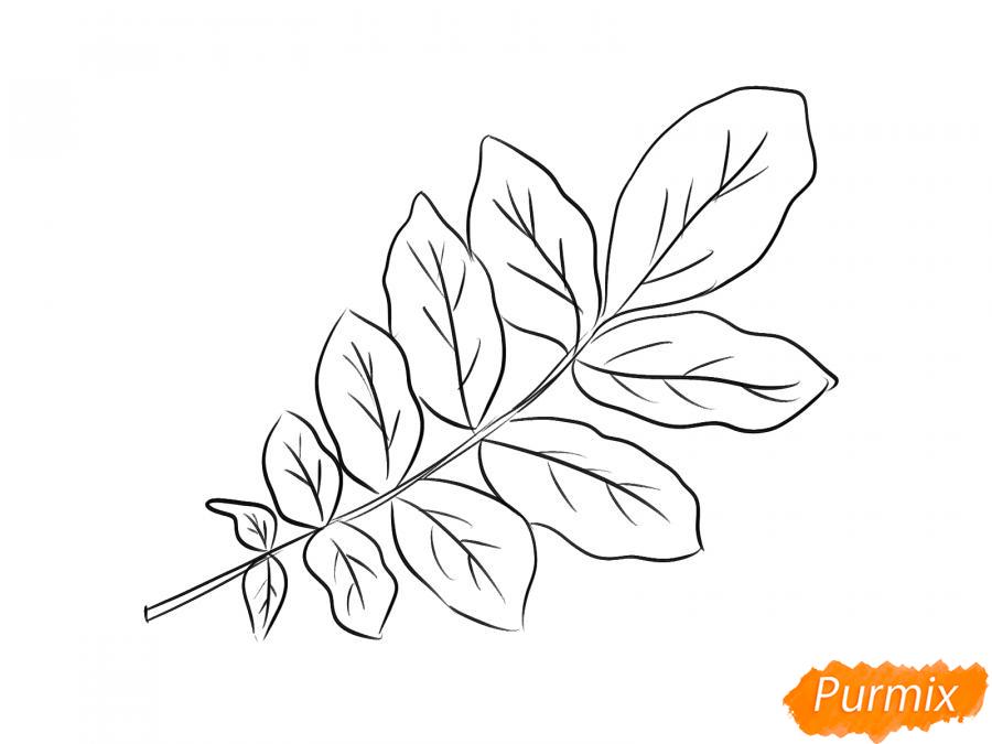 Рисуем ветку с листьями ореха - шаг 5
