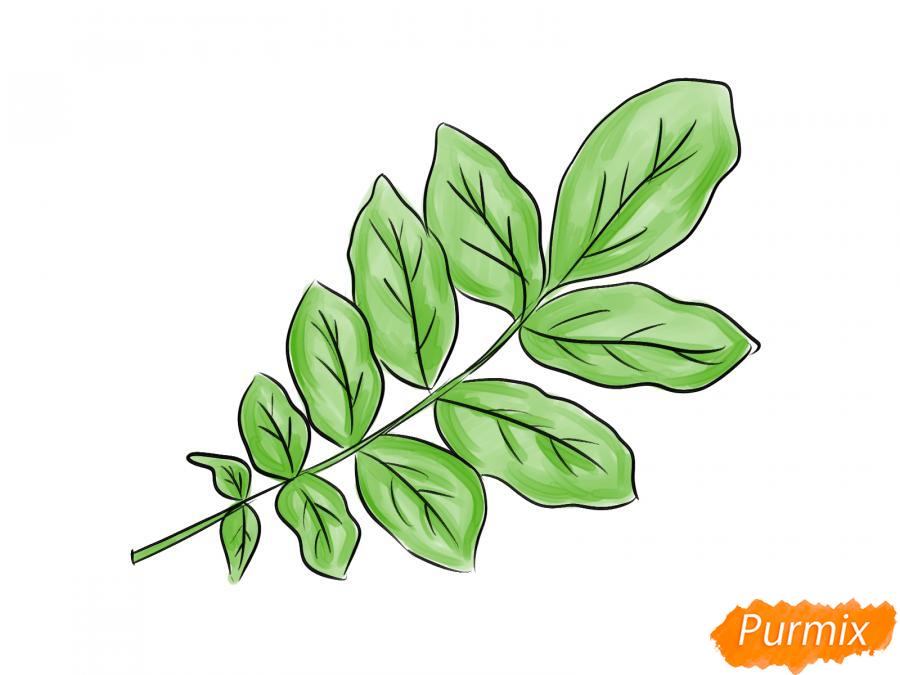 Рисуем ветку с листьями ореха - шаг 6
