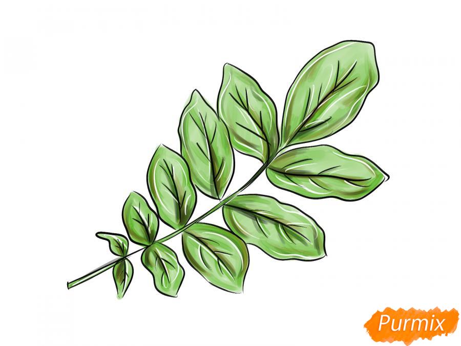 Рисуем ветку с листьями ореха - шаг 8