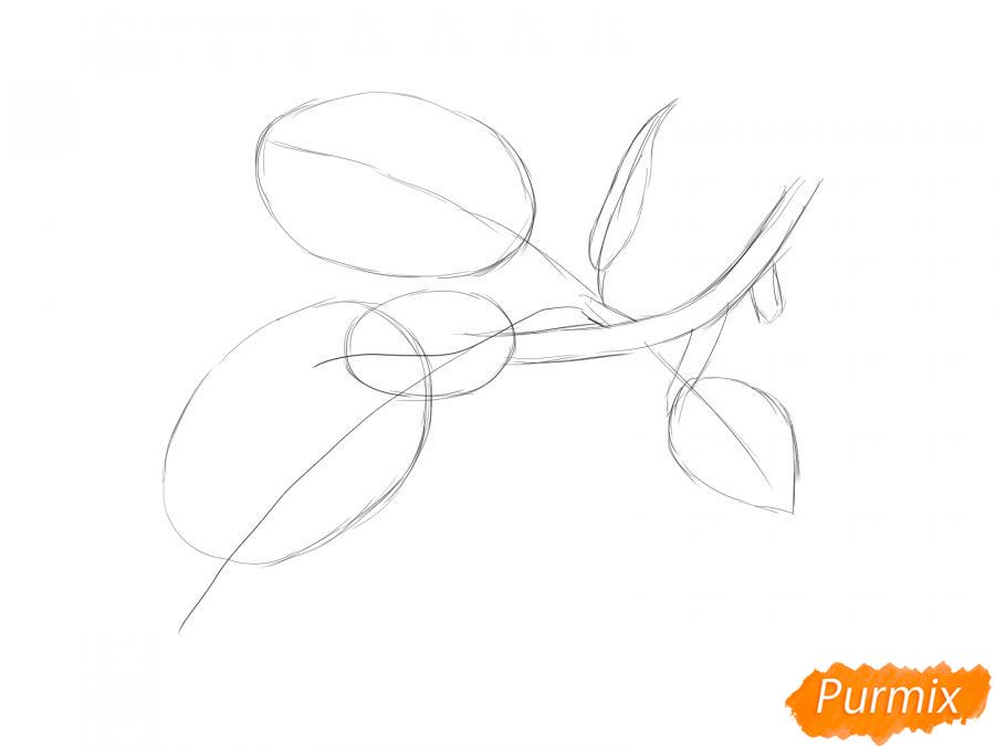 Рисуем ветку с листьями сливы - шаг 3