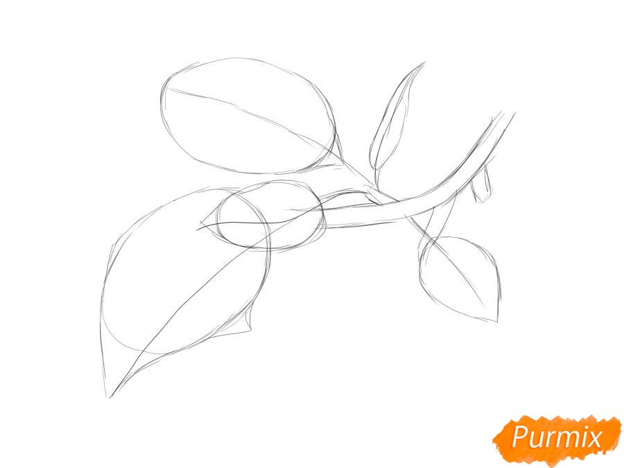 Рисуем ветку с листьями сливы - шаг 4