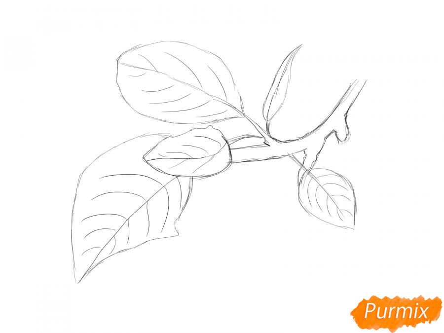 Рисуем ветку с листьями сливы - шаг 5