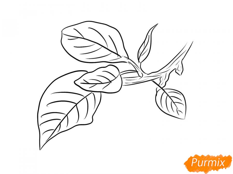 Рисуем ветку с листьями сливы - шаг 6