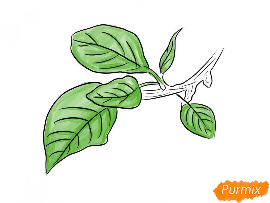 Рисуем ветку с листьями сливы - шаг 7