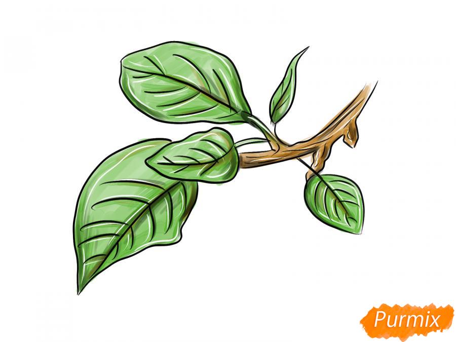 Рисуем ветку с листьями сливы - шаг 8