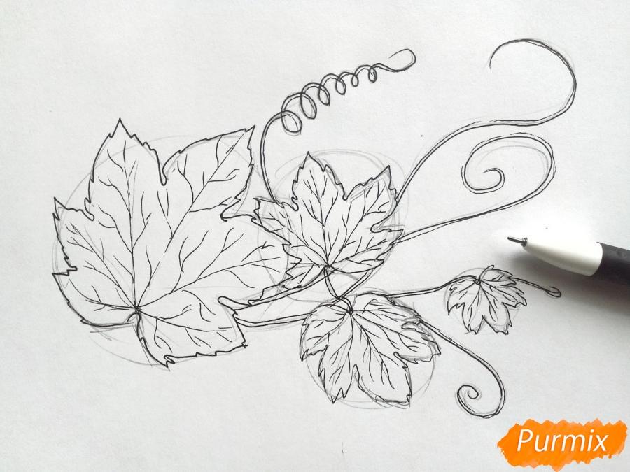 Рисуем ветку с листьями винограда - шаг 3