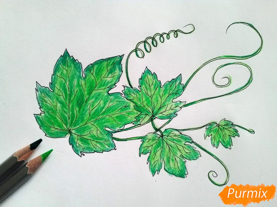 Рисуем ветку с листьями винограда - шаг 4