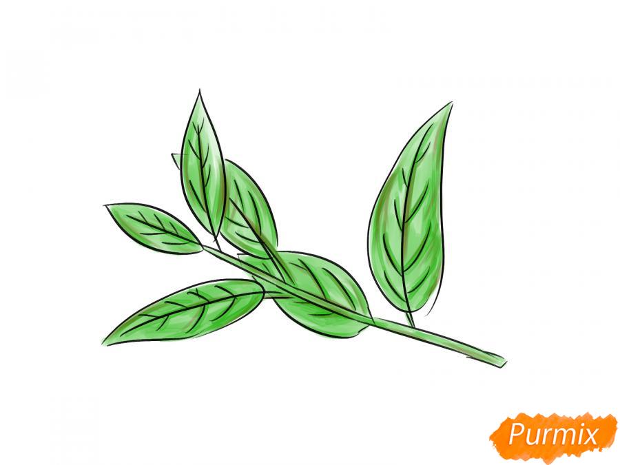 Рисуем ветку с листьями вишни - шаг 7