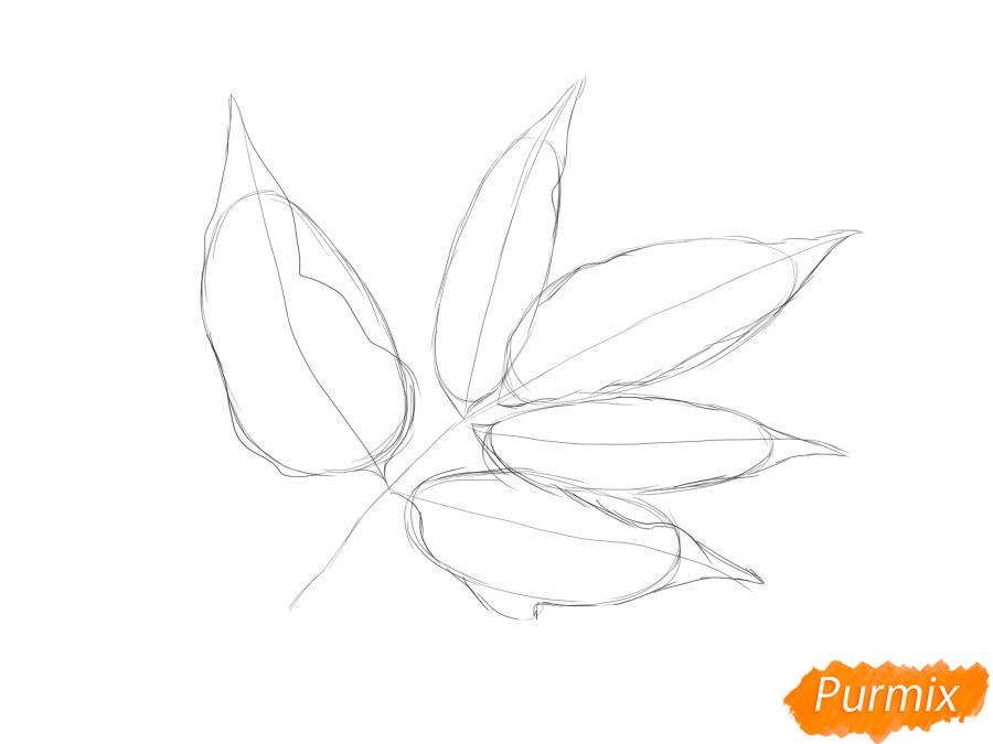 Рисуем ветку с листьями ясеня - шаг 3
