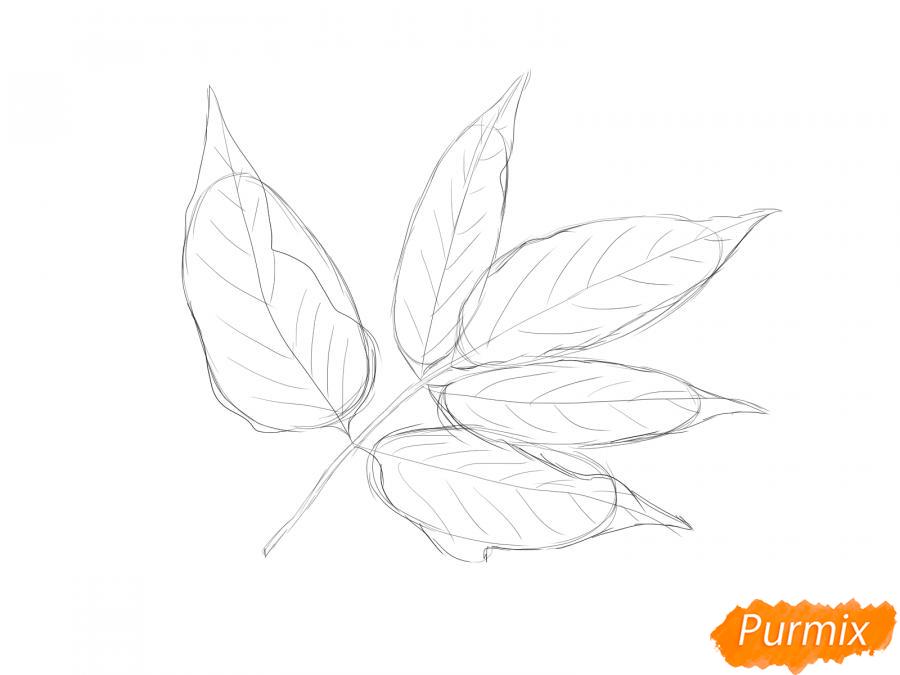 Рисуем ветку с листьями ясеня - шаг 4