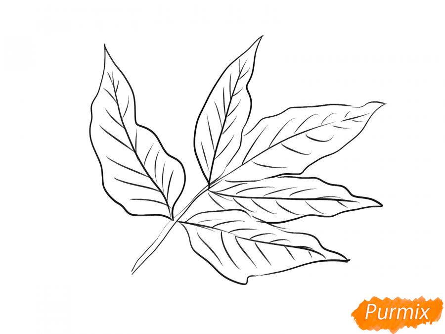 Рисуем ветку с листьями ясеня - шаг 5
