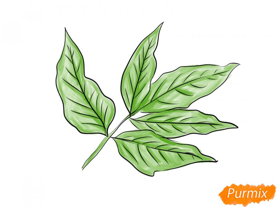 Рисуем ветку с листьями ясеня - шаг 6