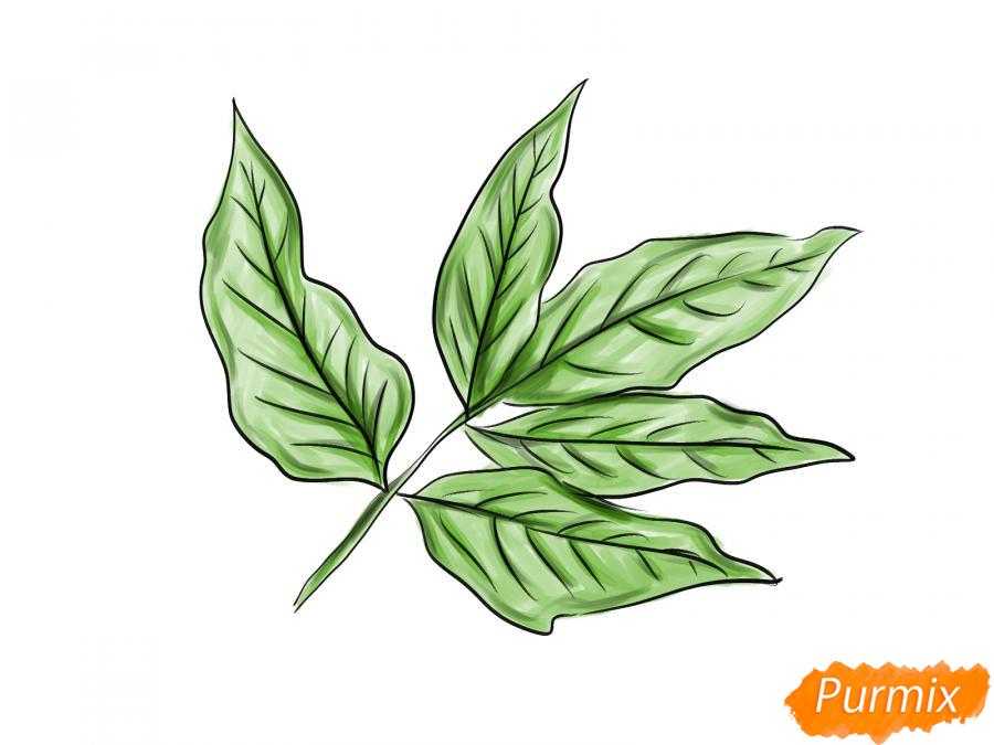 Рисуем ветку с листьями ясеня - шаг 7