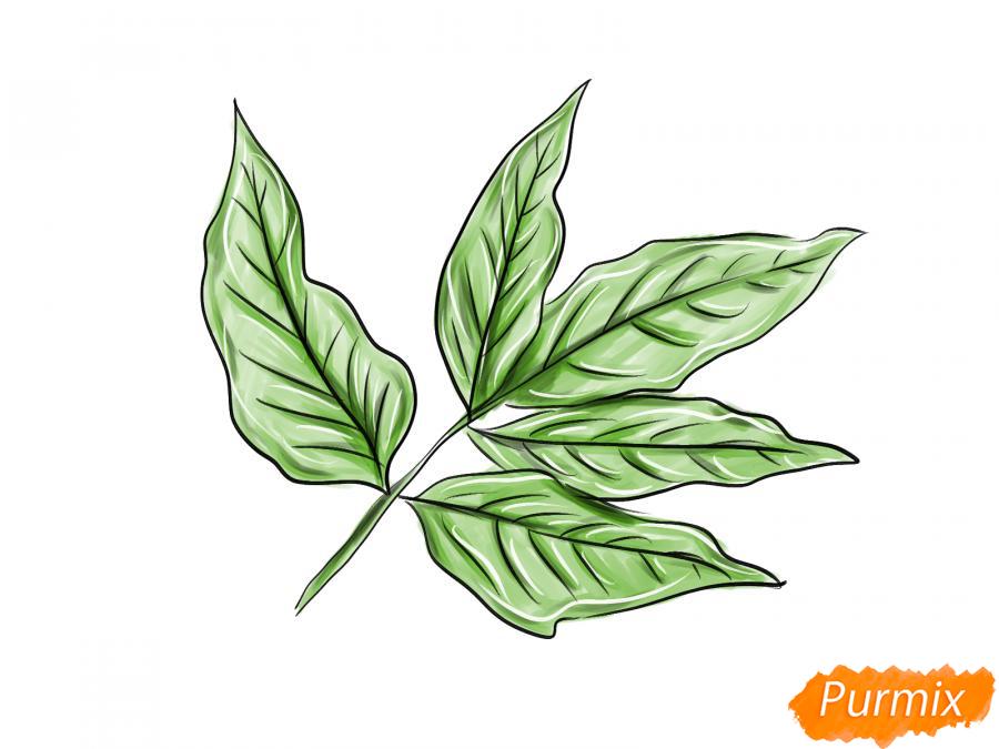 Рисуем ветку с листьями ясеня - шаг 8