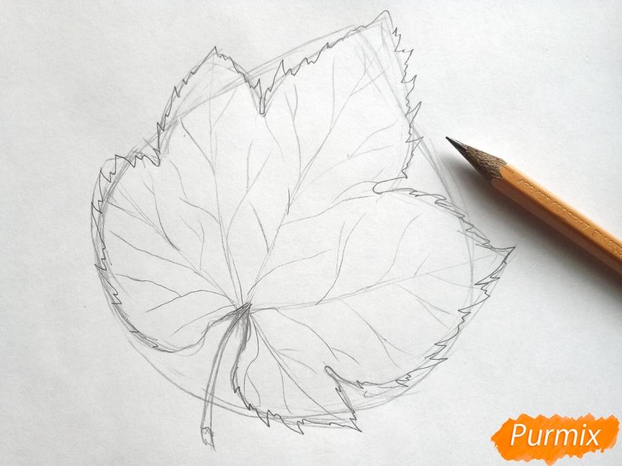 Рисуем виноградный лист - шаг 3
