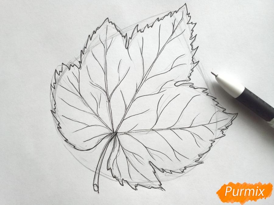 Рисуем виноградный лист - шаг 4