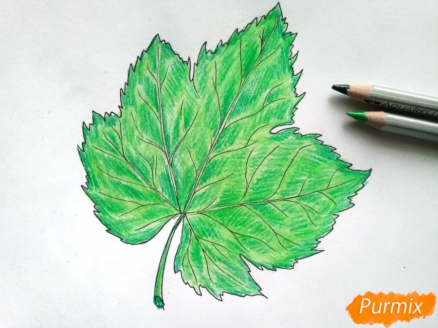 Рисуем виноградный лист - шаг 5