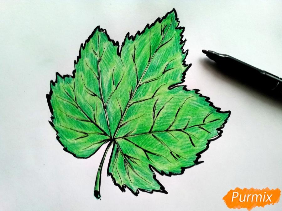 Рисуем виноградный лист - шаг 6
