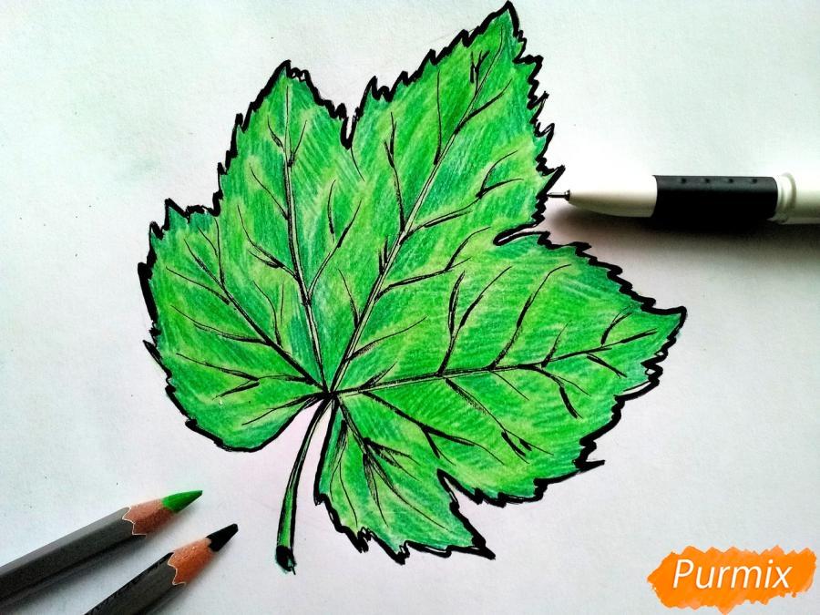 Рисуем виноградный лист - шаг 7