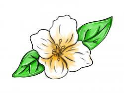 жасмин цветок